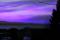 The Color Purple Essay